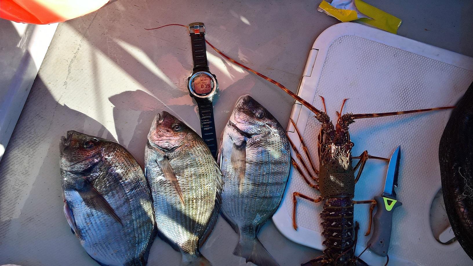 Sortie Club Du 11 Juin Comptage Et Pêche