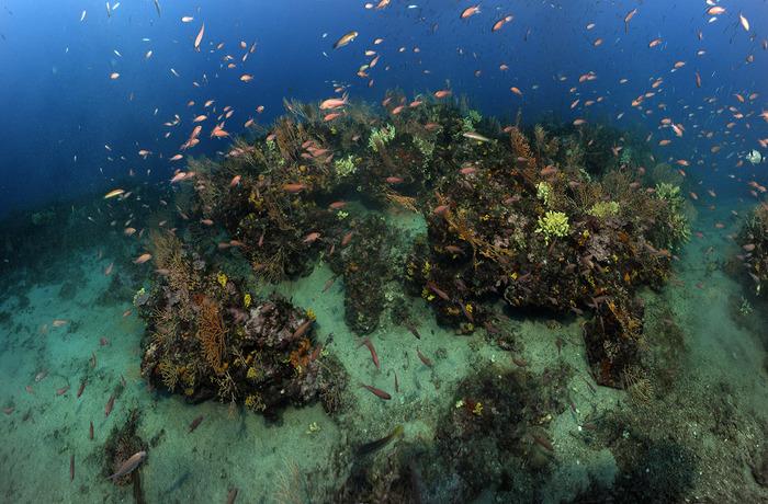 La Mer Méditerranée Sous Haute Surveillance-Fête De La Science
